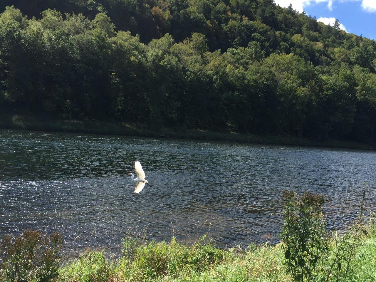 Egret on the Delaware River
